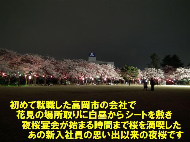 夜桜初撮影の場所で楽しむ (1)