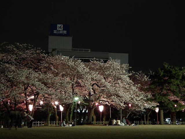 夜桜初撮影の場所で楽しむ (2)