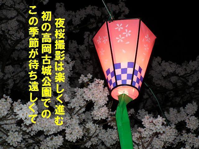 夜桜初撮影の場所で楽しむ (3)