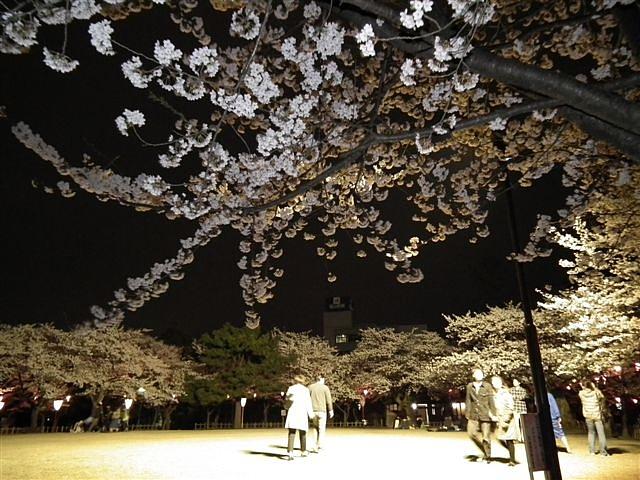 夜桜初撮影の場所で楽しむ (4)