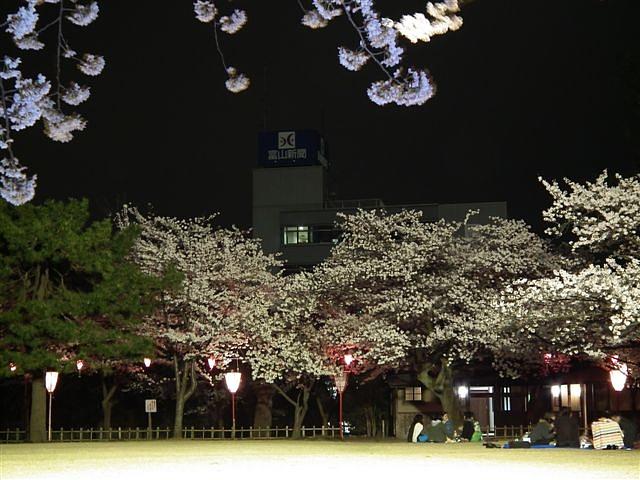 夜桜初撮影の場所で楽しむ (5)