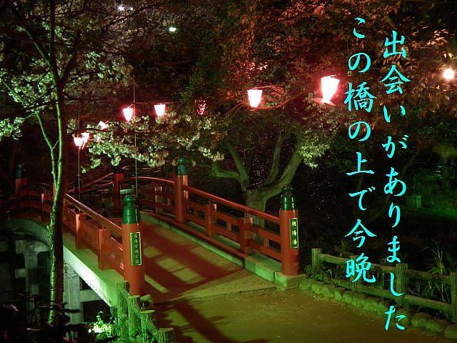 夜桜初撮影の場所で楽しむ (6)