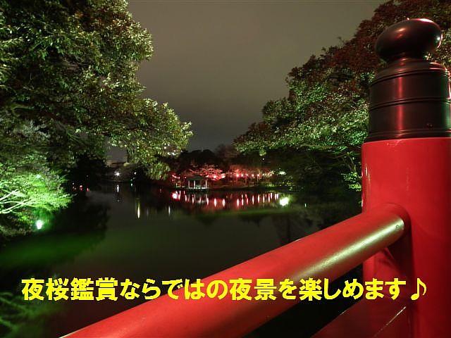 夜桜初撮影の場所で楽しむ (7)