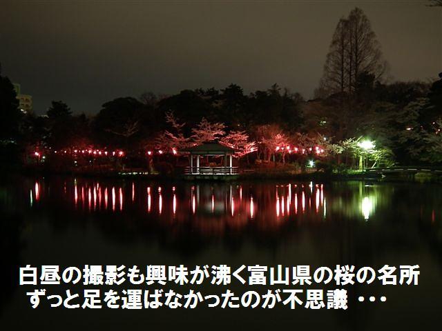 夜桜初撮影の場所で楽しむ (8)