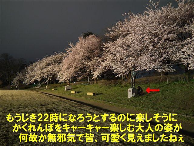 夜桜初撮影の場所で楽しむ (10)