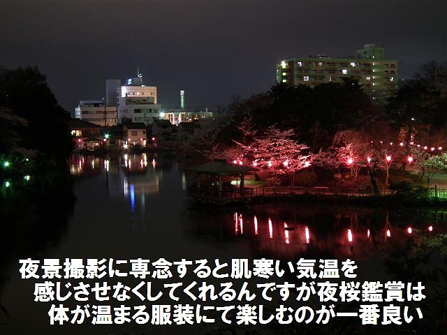 夜桜初撮影の場所で楽しむ (11)