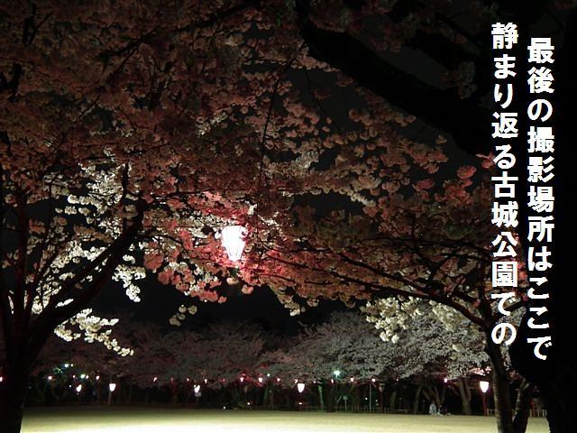 夜桜初撮影の場所で楽しむ (12)