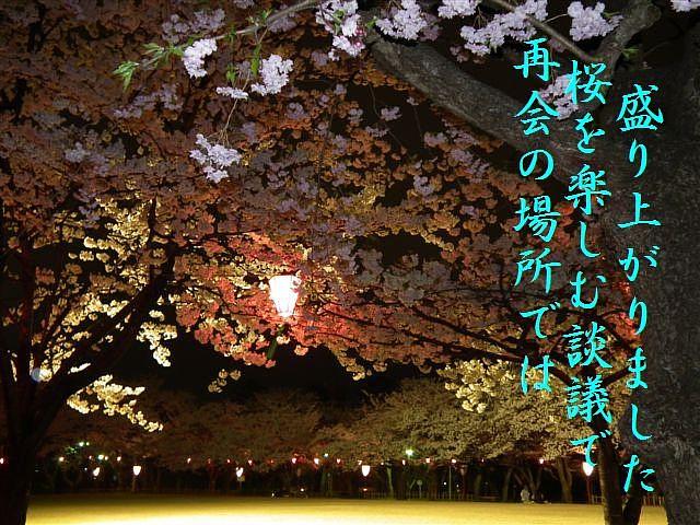 夜桜初撮影の場所で楽しむ (13)