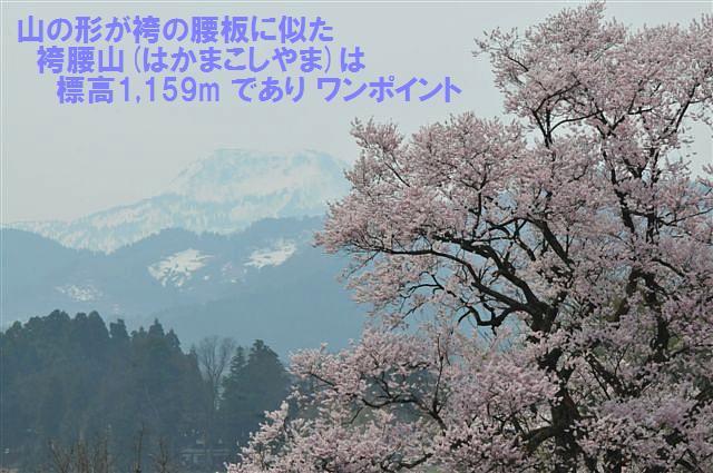 1本桜を求めて (7)