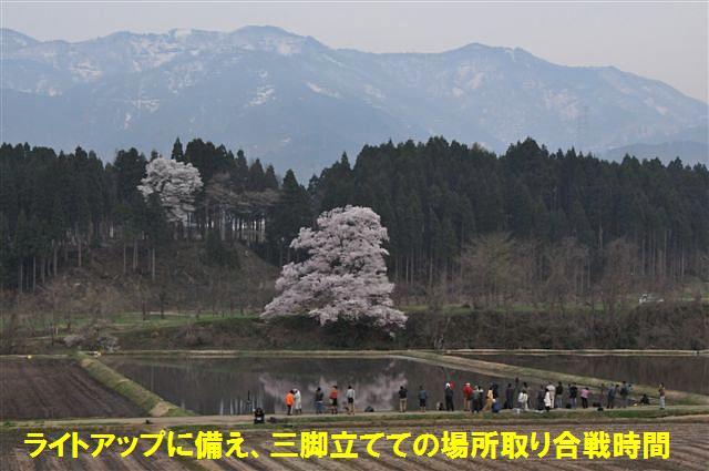 1本桜を求めて (12)