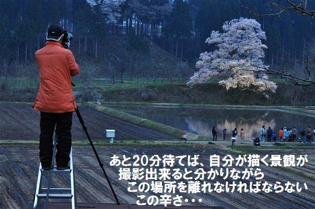 1本桜を求めて (13)