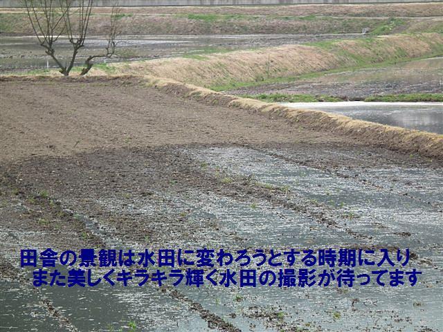 水田の季節到来 (1)