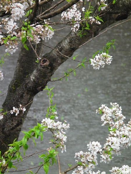 水田の季節到来 (3)