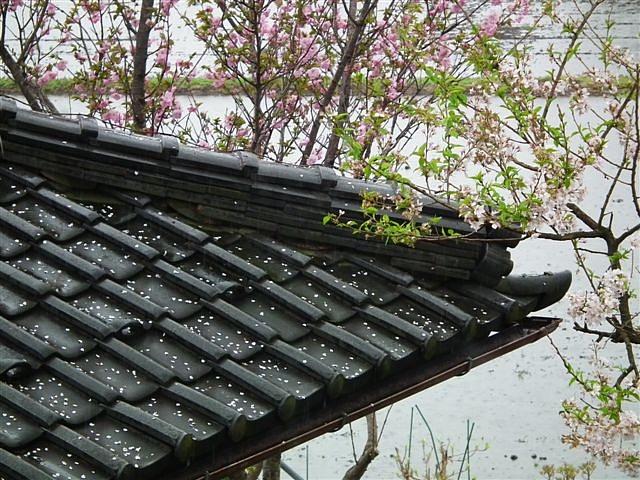 水田の季節到来 (4)
