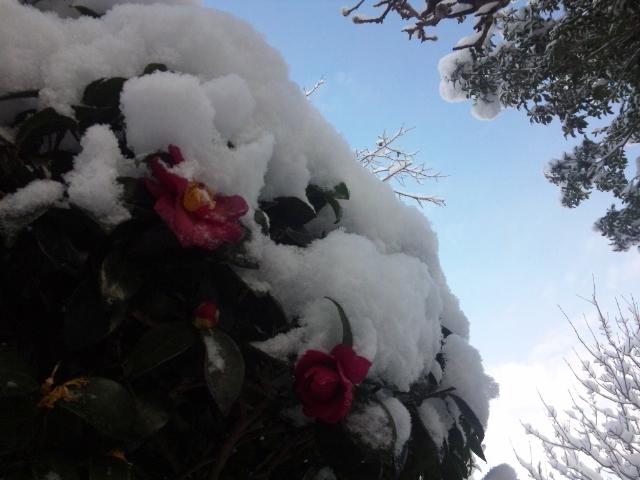 2014 平野部初積雪 (2)