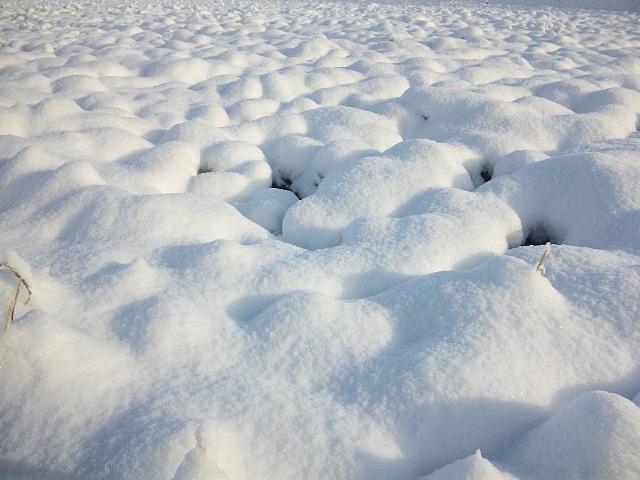 2014 平野部初積雪 (3)