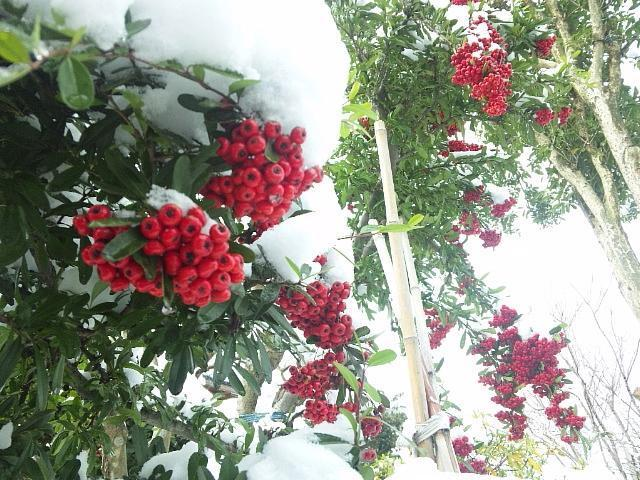 2014 平野部初積雪 (4)