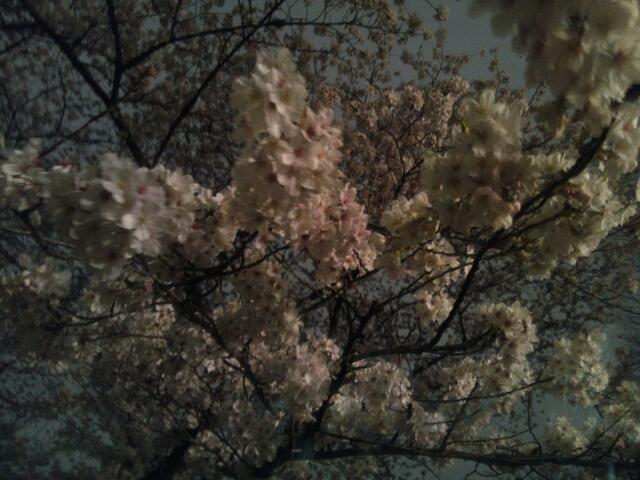 sakura_pink.jpg