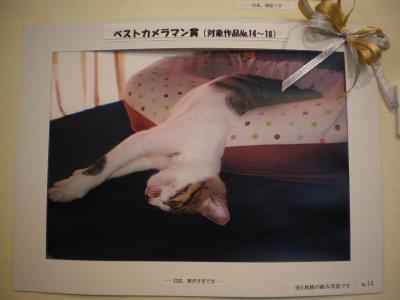 にゃん日6