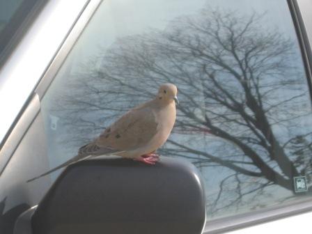 鳩です003