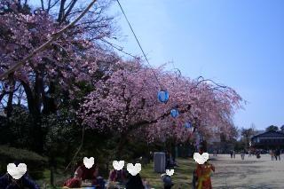 桜3_100327