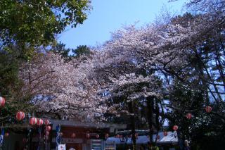 桜2_100327