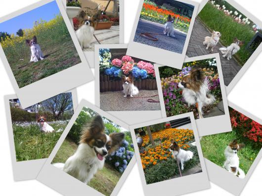 2008-06-11_convert_20100321222706.jpg