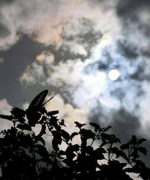 蝶の居る風景(アオスジアゲハ)