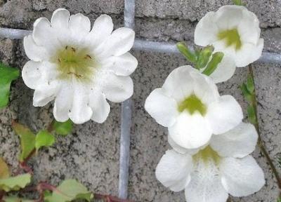 13枚の花びら