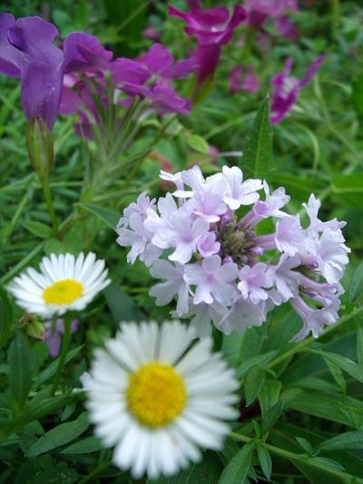 庭に咲く草花