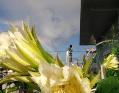 ドラゴンフル-ツの花