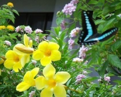 花とチョウ