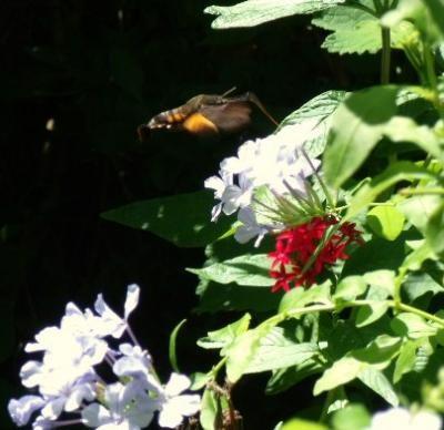 植物と昆虫