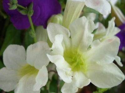 8枚の花びら