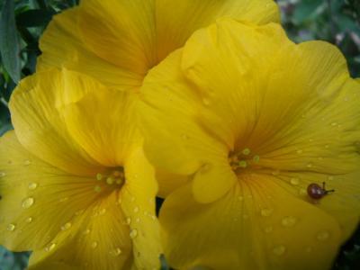 黄色い花とかたつむり