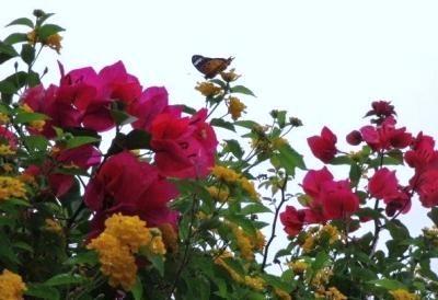 ア-チ上の花とチョウ