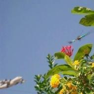 チョウと飛行機