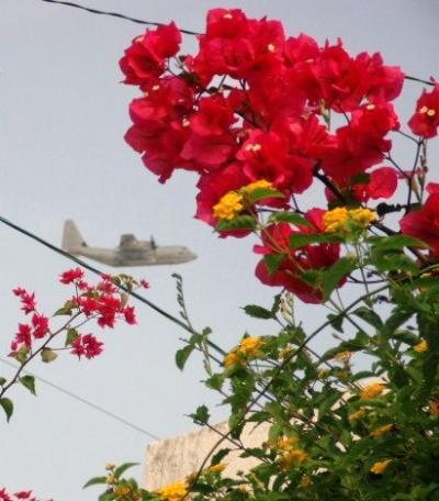 ブ-ゲンビレアと飛行機