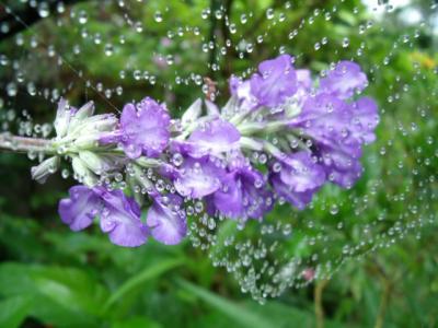 花とクモの巣