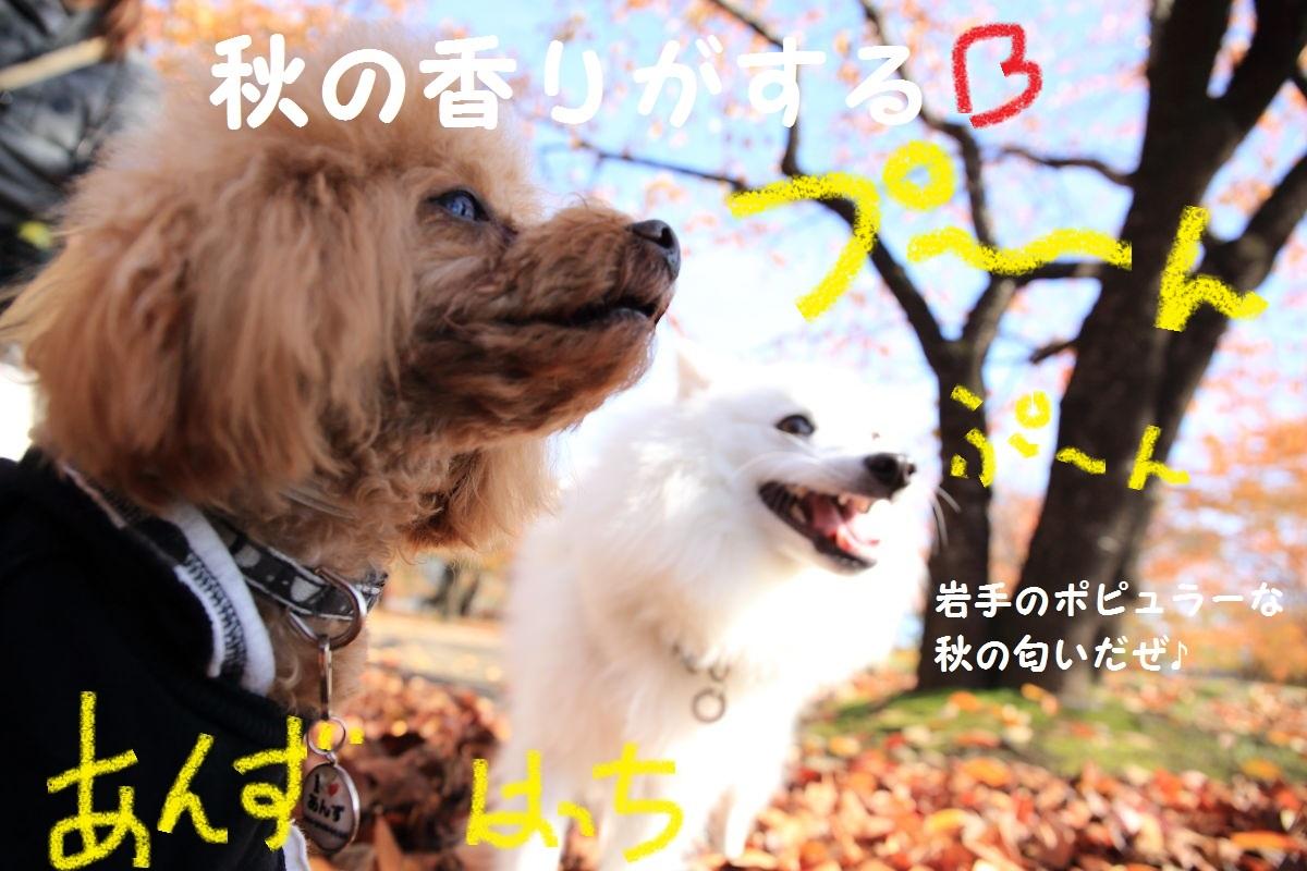 3_20131121191239aa7.jpg