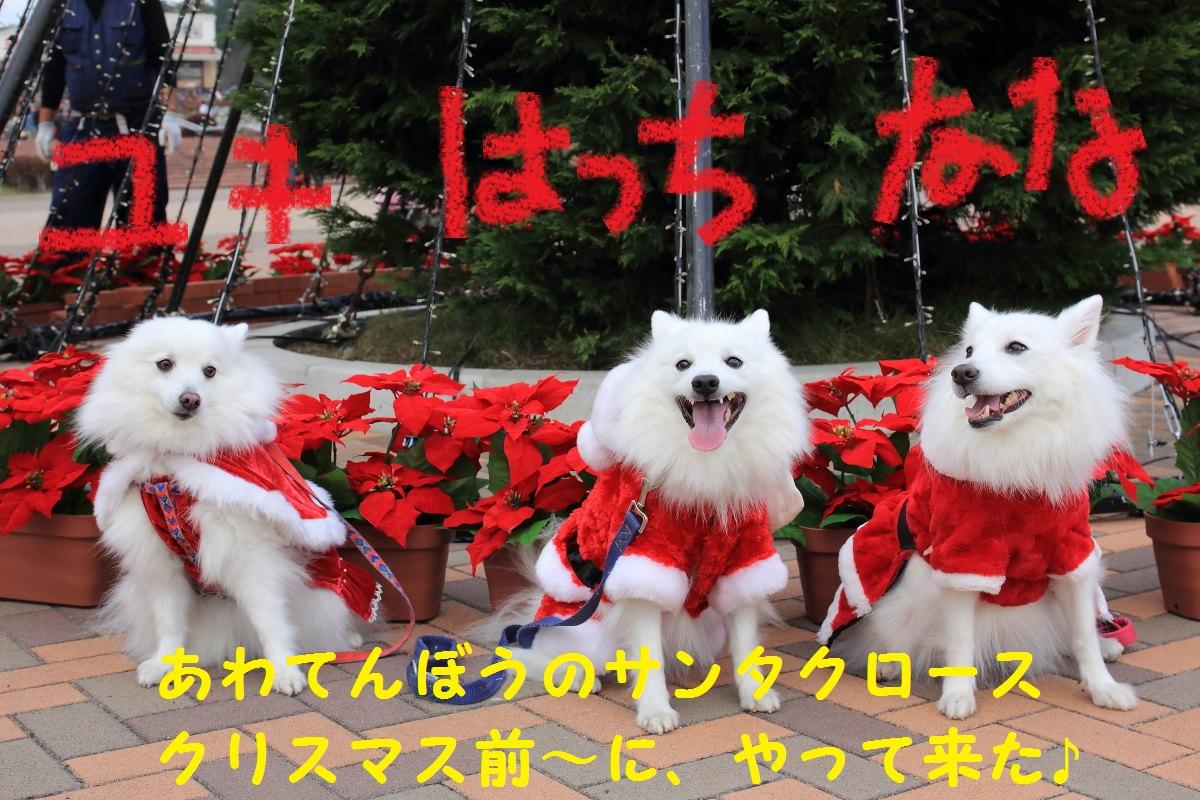 7_2013111919591317b.jpg