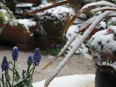 雪の朝 13