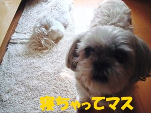 2010年05月25日_DSC07277