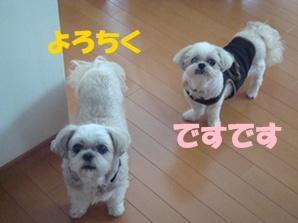 2010年08月01日_DSC07709