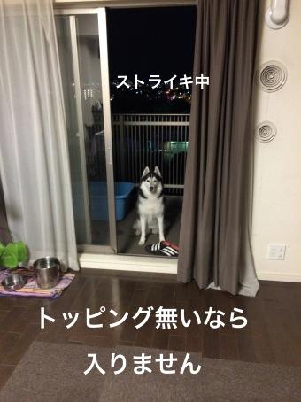 IMG_0368_Fotor.jpg