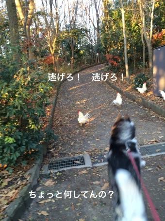 IMG_0372_Fotor.jpg
