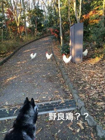 IMG_0373_Fotor.jpg