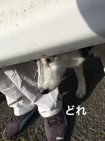 IMG_0408_Fotor.jpg