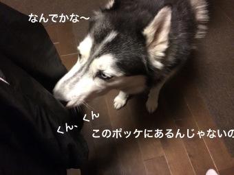IMG_0468_Fotor.jpg