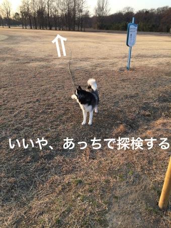 IMG_0494_Fotor.jpg